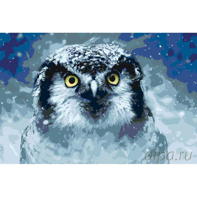 A430 Зимняя сова Раскраска картина по номерам на холсте ...