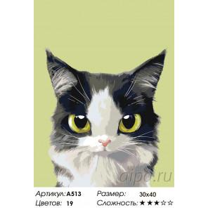 Счастливчик Раскраска по номерам на холсте Живопись по номерам A513