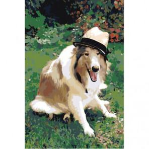 Колли в шляпе Раскраска картина по номерам на холсте