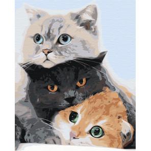 Три кота Раскраска картина по номерам на холсте AAAA-KT2-100x125