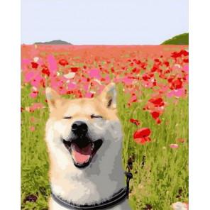 Счастливый пес в маковом поле Раскраска картина по номерам на холсте PK68012