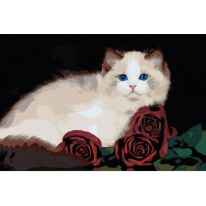 Персидская кошка с розами Раскраска картина по номерам на холсте AAAA-RS018-80x120