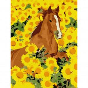 Лошадь в подсолнухах Раскраска по номерам на холсте Molly KH0791