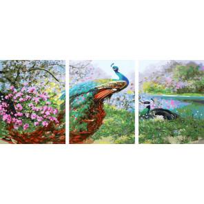 Павлины Триптих Раскраска картина по номерам на холсте РХ5281