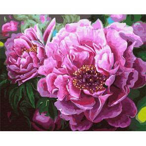 Цветение пиона Раскраска картина по номерам на холсте GX4667