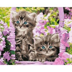 Котята в корзинке Раскраска картина по номерам на холсте U8037