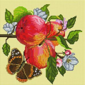 Яблоки на ветке Алмазная вышивка мозаика на подрамнике Белоснежка 586-ST-S