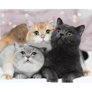 Три счастливых кота Раскраска картина по номерам на холсте GX39951