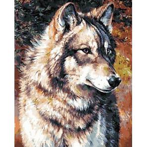Гордый волк Раскраска картина по номерам на холсте GX40307