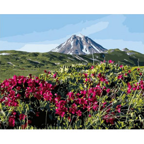 Прекрасное поле в горах Раскраска картина по номерам на холсте GX40029
