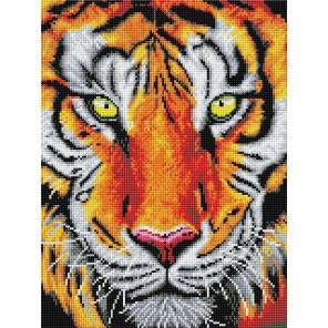Тигр Алмазная вышивка мозаика Color kit DKD1006