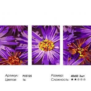 Количество цветов и сложность Фиолетовые ромашки Триптих Раскраска картина по номерам на холсте