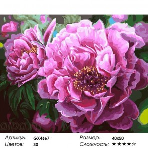 Сложность и количество цветов Махровые пионы Раскраска картина по номерам на холсте GX4667
